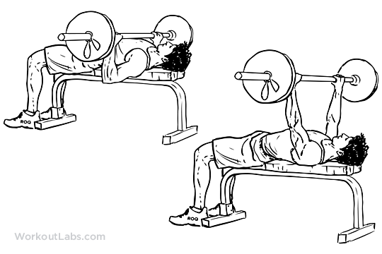 Since It Works The Entire Chest Muscle Bench Press Is One Of Oldest And Most Effective Exercises Can Find Perform Whilst